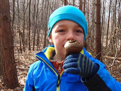 grzyby 2017, grzyby wiosenne, grzyby w marcu, Caloscypha fulgens kielonka błyszcząca