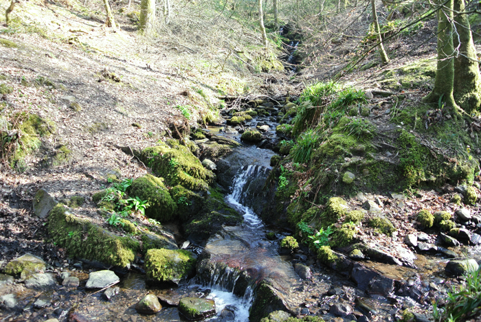 A brook in the woods near Loch Lomond