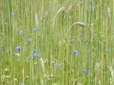 przyroda w czerwcu, ciekawostki, slow life, blog