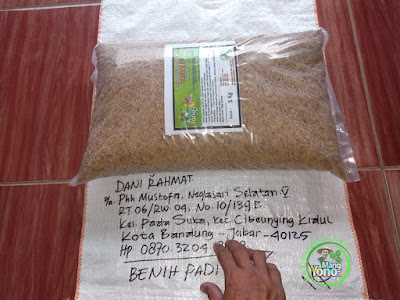 Benih Padi TRISAKTI Pesanan DANI RAHMAT Bandung, Jabar  (Sebelum di Packing)