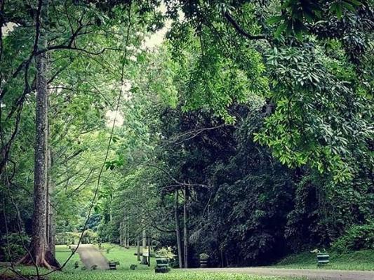 kebun raya purwodadi wisata pasuruan