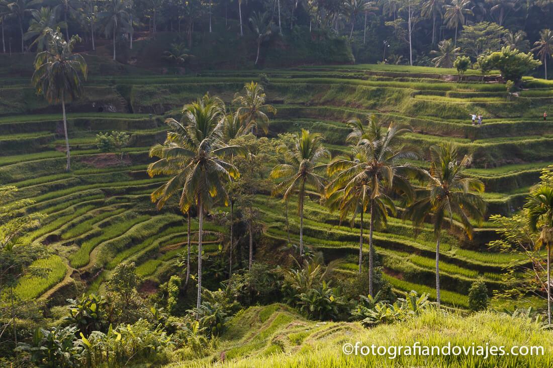 arrozales de Tegalalang en Bali