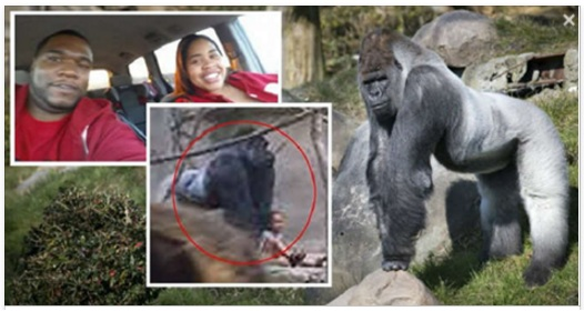 gorilla and the children in the zoo outbreak
