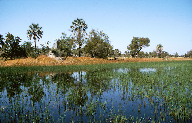 incontri in Botswana di ragazzi bianchi