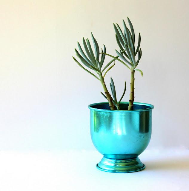 Succulent in a vintae anodised aluminium planter