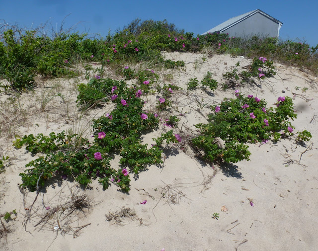 Jarvis House: A Visit to Montauk, Long Island