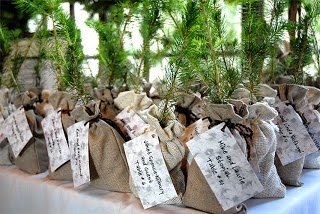 wedding party favor center piece ideals plant tree eco friendly green