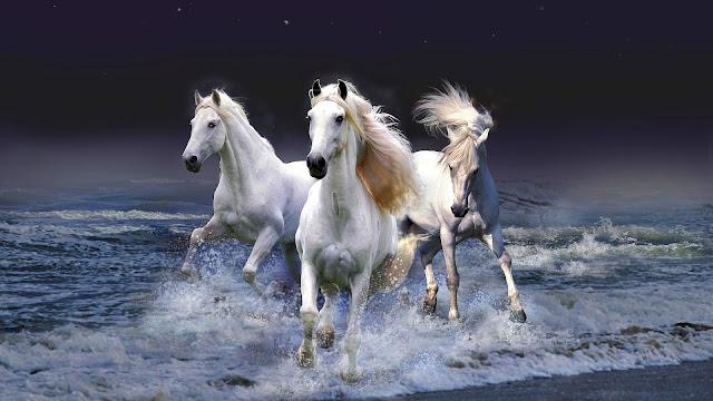 Drie witte paarden in de zee die uit de zee komen lopen