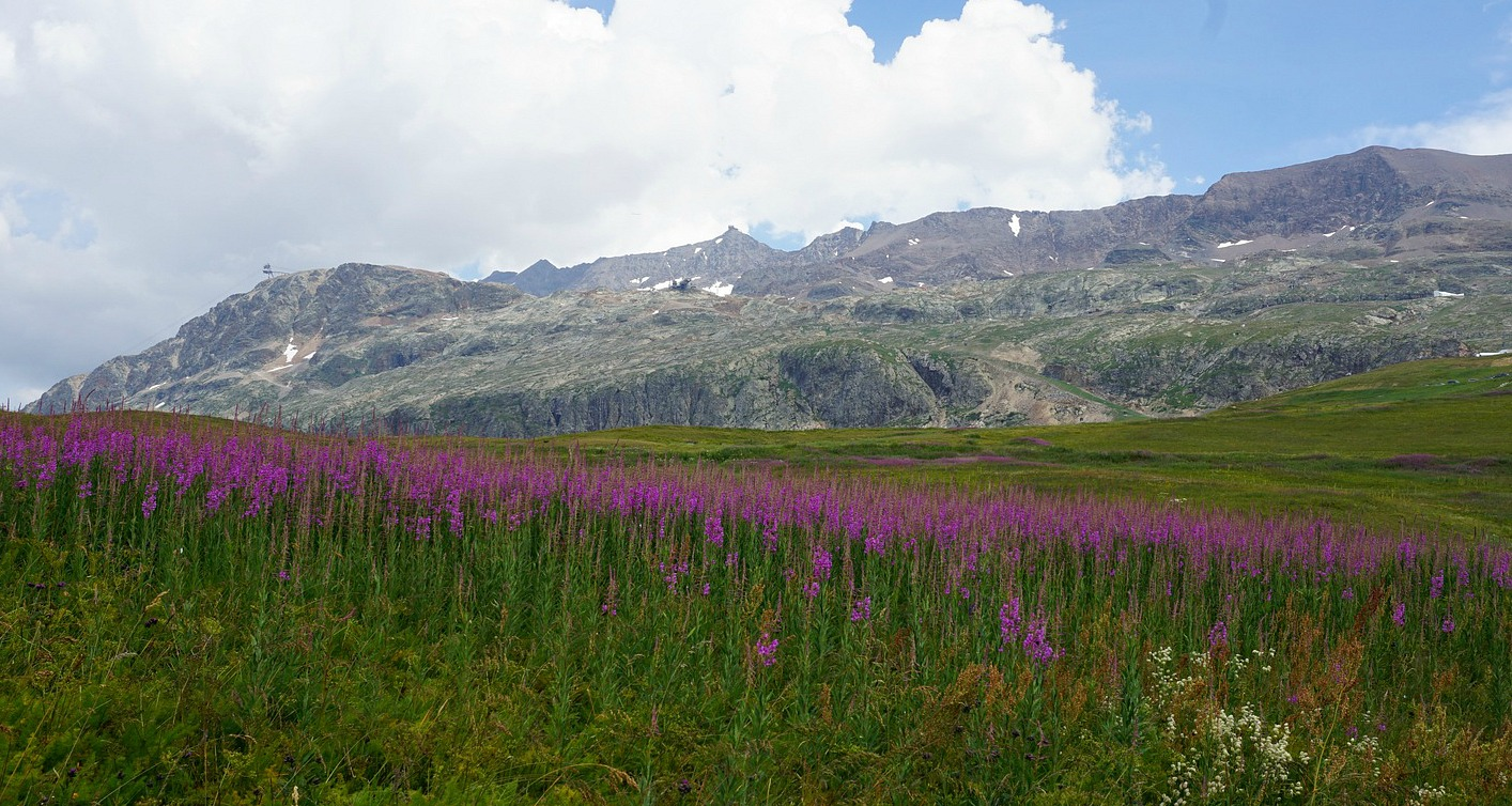 Alpine meadows above Alpe d'Huez