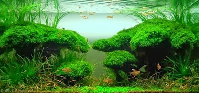 Jenis Jenis Ikan Hias Dan Tanaman Aquascape Zonaquascape