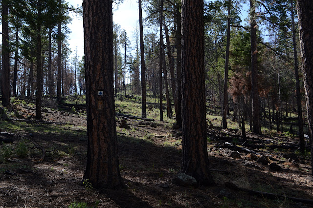 faint but visible trail with crest and blaze