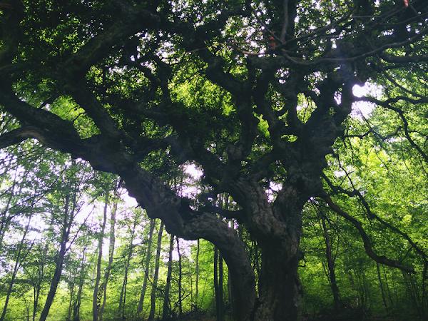 Средна гора: Кичестият габър и хижа Каваклийка