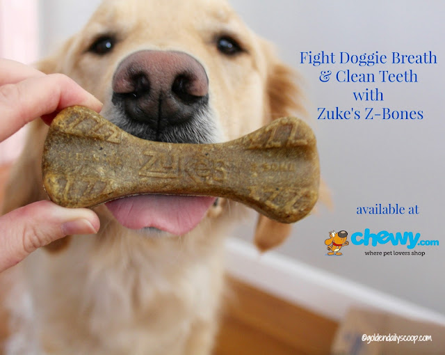 dog dental health, Zuke's Z-Bones #ChewyInfluencer