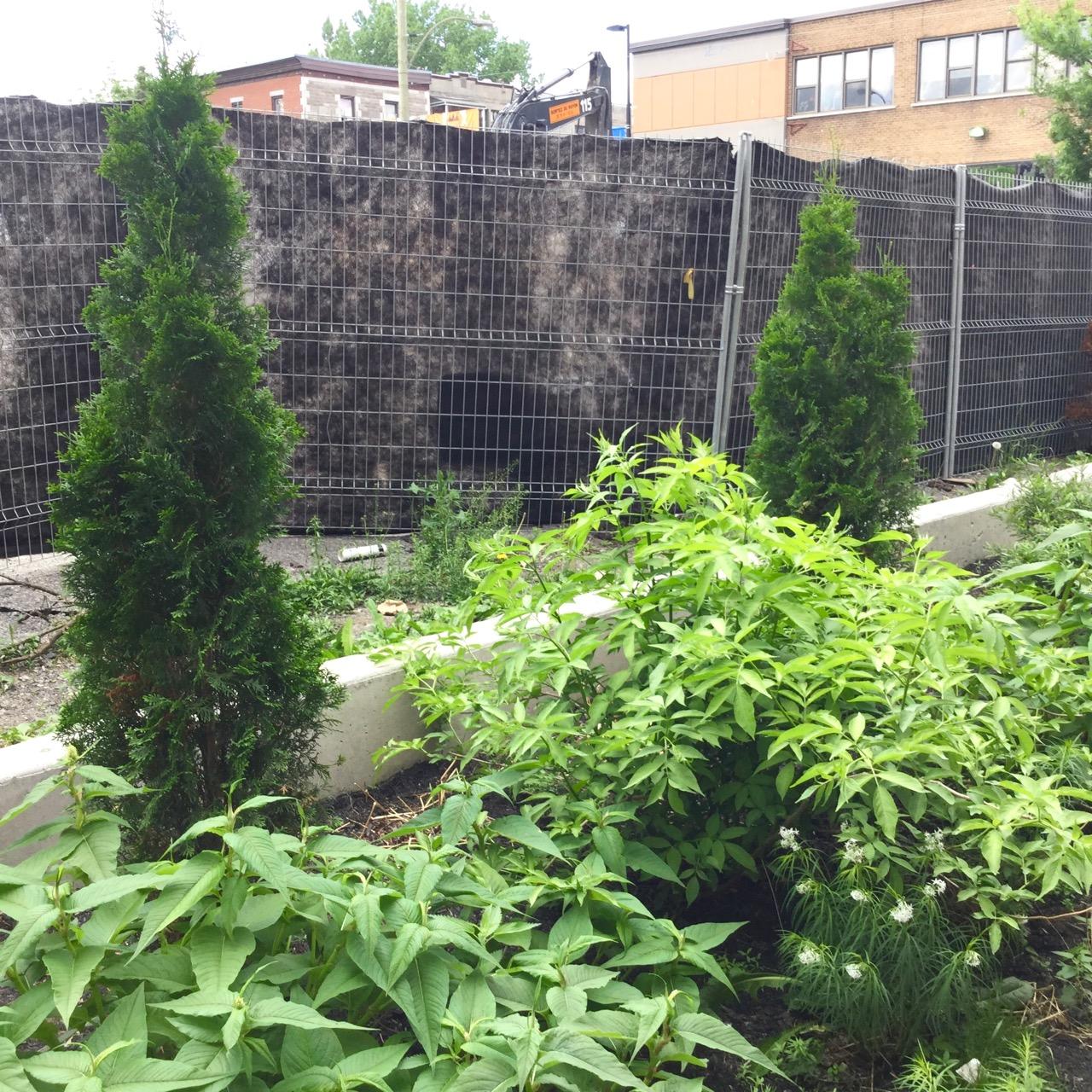 Flora urbana pour de meilleures ruelles vertes for Catalogue plantation