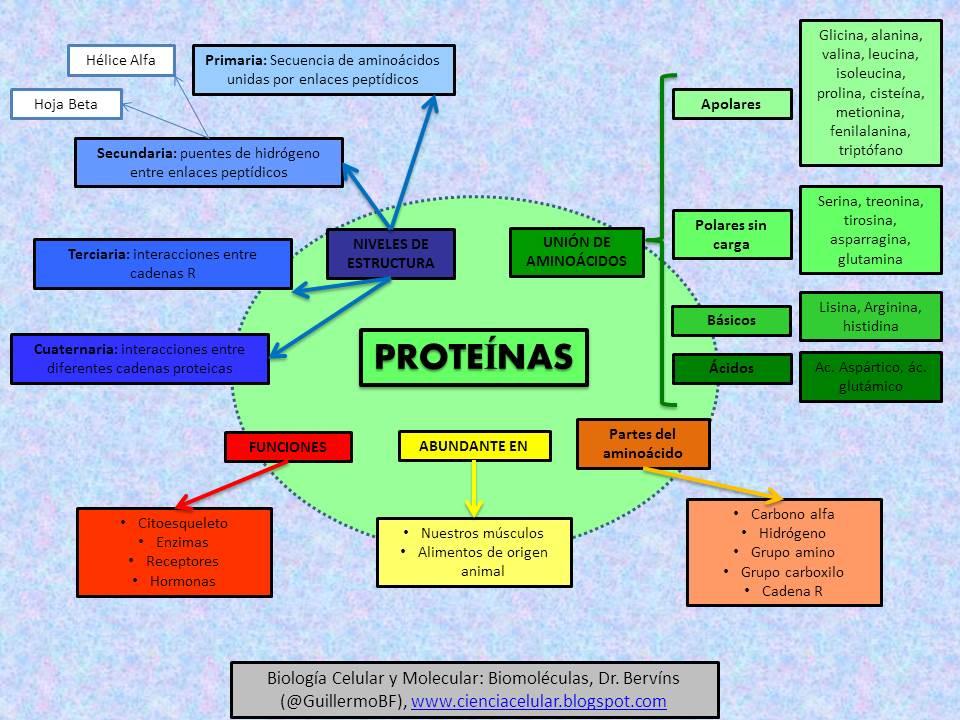 Importancia De Las Proteinas En La Nutricion Mapa