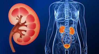 Ginjal Anda Ingin Sehat, Berikut Cara Menjaga Kesehatan Ginjal, ginjal, ckd, penyakit ginjal