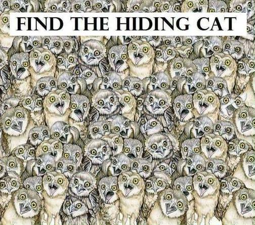 Tes Gambar Bila Anda Bisa Temukan Gambar Kucing Dalam 1 Menit Artinya