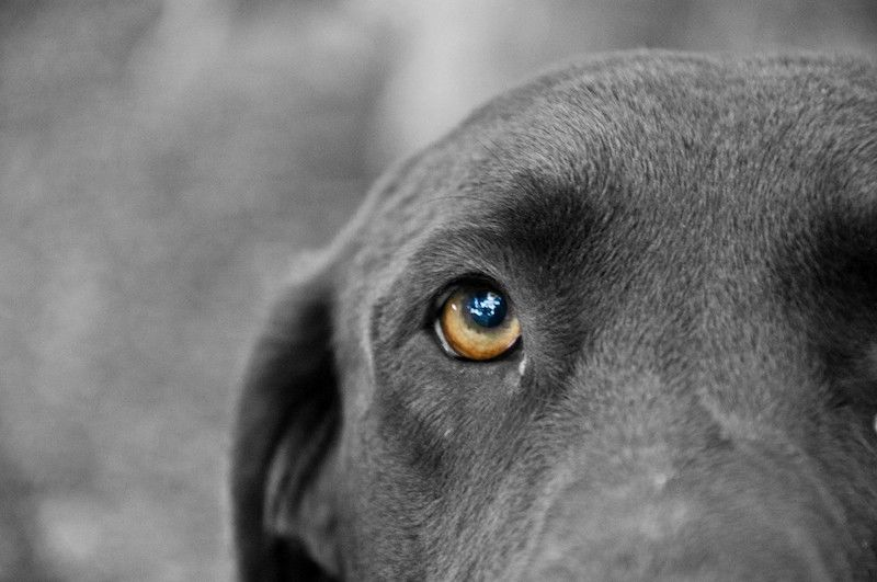 Σημάδια για να καταλάβετε τον μυϊκό πόνο στο σκύλο σας