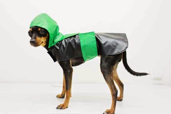 Tara con impermeable para perros caninetto