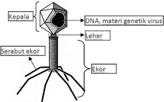Virus Pemakan Bakteri ( Bakteriofag ) Beserta Penjelasannya