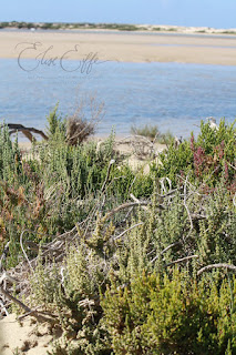 Plants Salt Scrub sand ocean Hindmarsh island