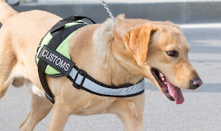 Can Canines Sniff Out Smuggled Artifacts?  Working Dogs Join Fight to Save Cultural Heritage