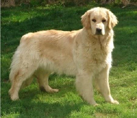 أفضل 10 كلاب من حيث قوة حاسة الشم المزرعة