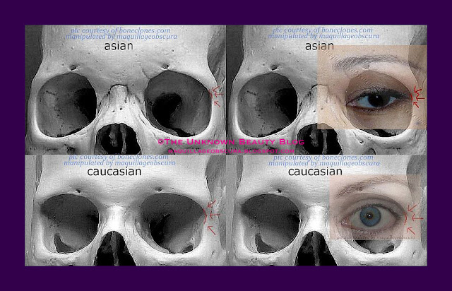 The Difference Between Asian And Caucasian Eyes-4322