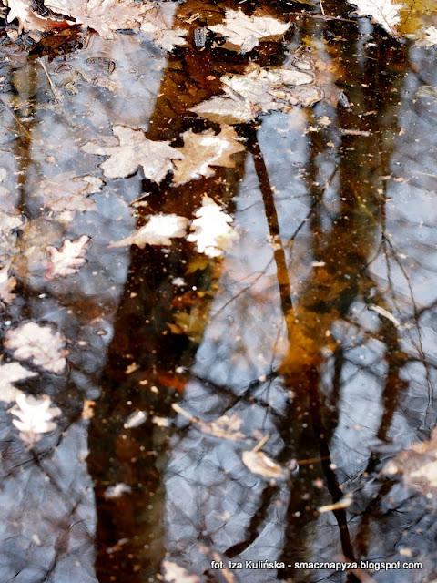 odbicie lustrzane, woda, las podmokly, wiosna, oznaki wiosny, las bemowski, lasy miejskie, spacer po lesie, poszukiwanie wiosny, wycieczka do lasu, grzybobranie