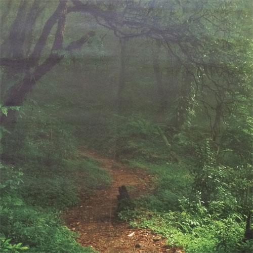 behang regenwoud