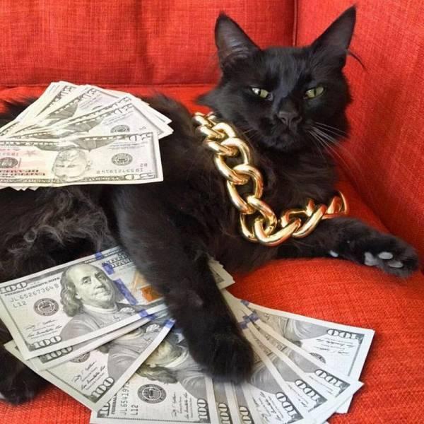 Funny cats - part 218, cat photos, cute cat album, funny cat pic