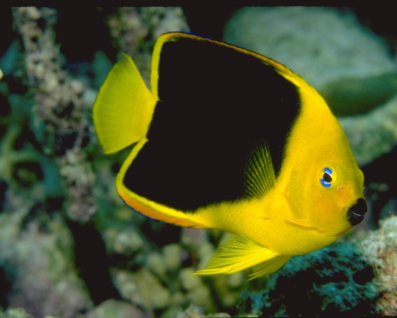 My Amazing Things Blog Beautiful Fishes Photos