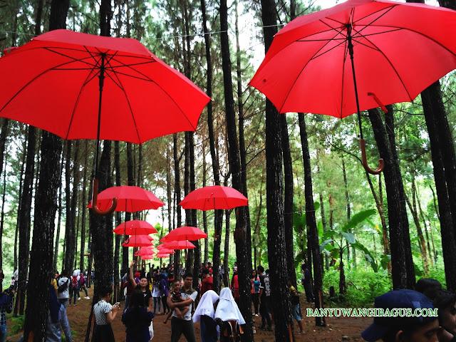 Wisata Hutan Pinus Songgon.
