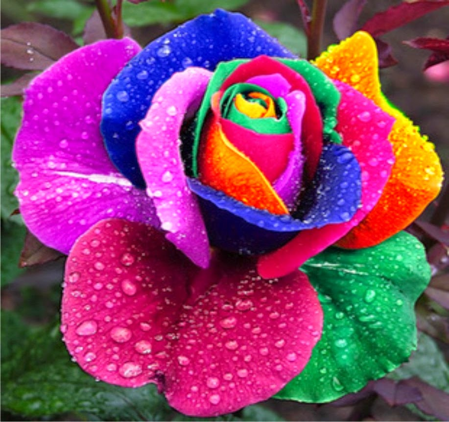 Eco art top 10 most beautiful flowers in the world izmirmasajfo