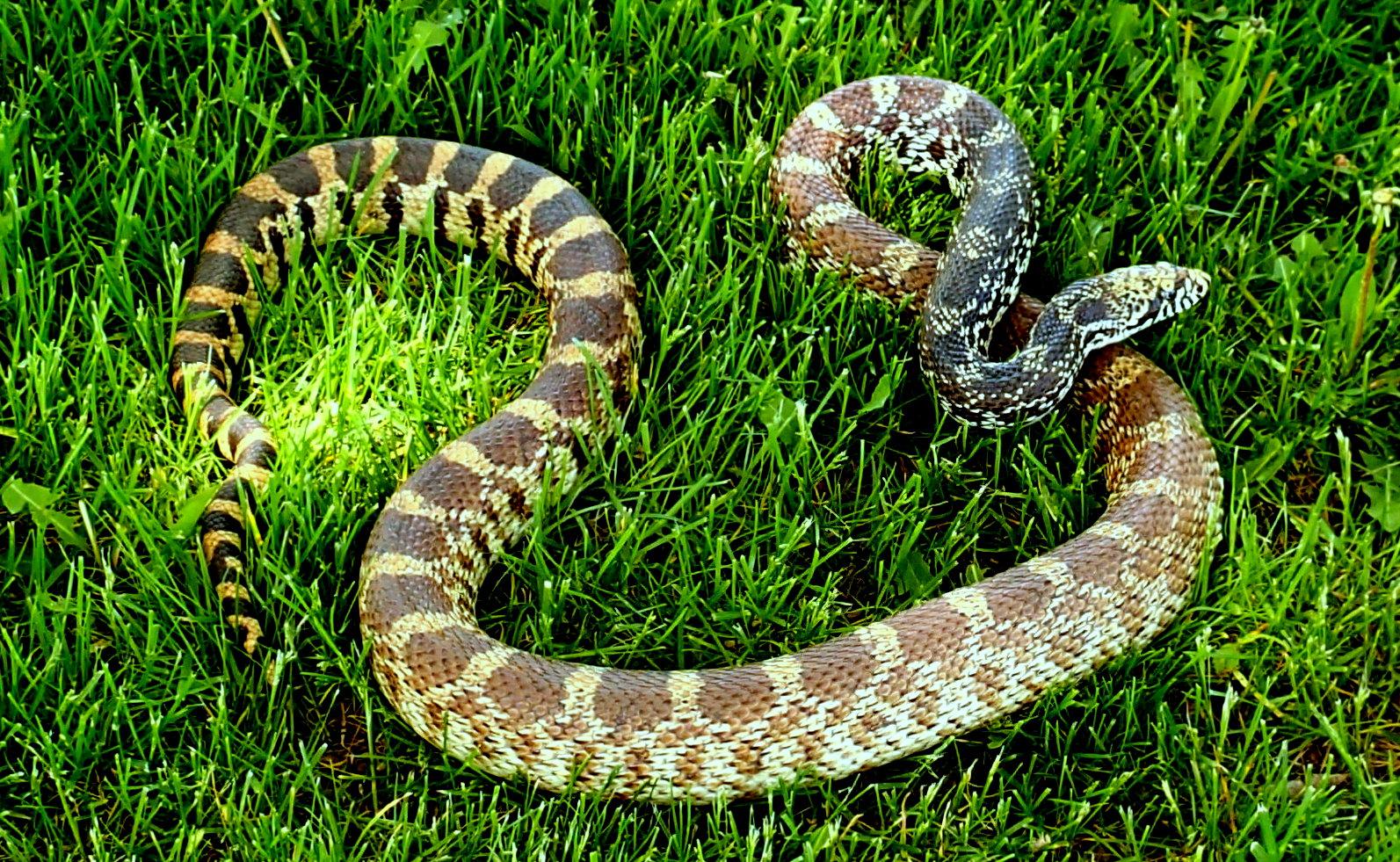 snake - photo #25