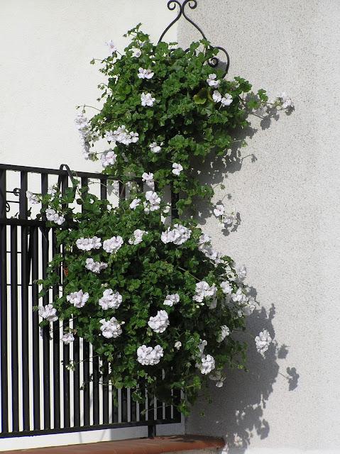 metalowe barierki w ogrodzie
