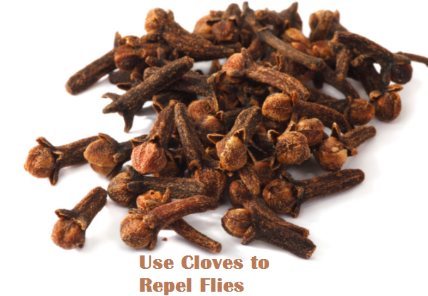 Use Cloves to Repel Flies