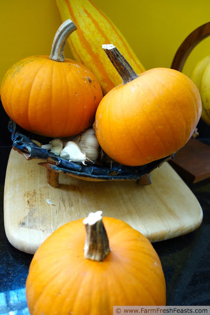 photo of a pile of pumpkins and winter squash