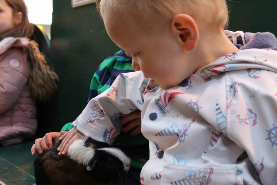 boys-petting-guinea-pig