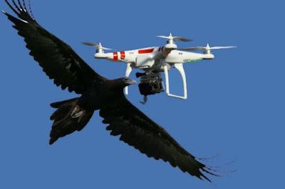 Οι πιο απίστευτες επιθέσεις ζώων σε drones!