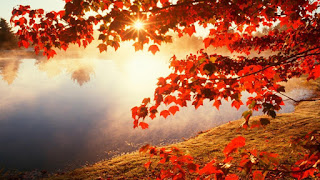 Picture of Autumn leaves with God's light shining through