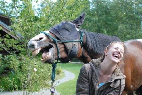 Caballo riendo con una chica