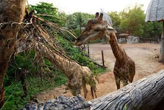 Dusit Zoo Bangkok