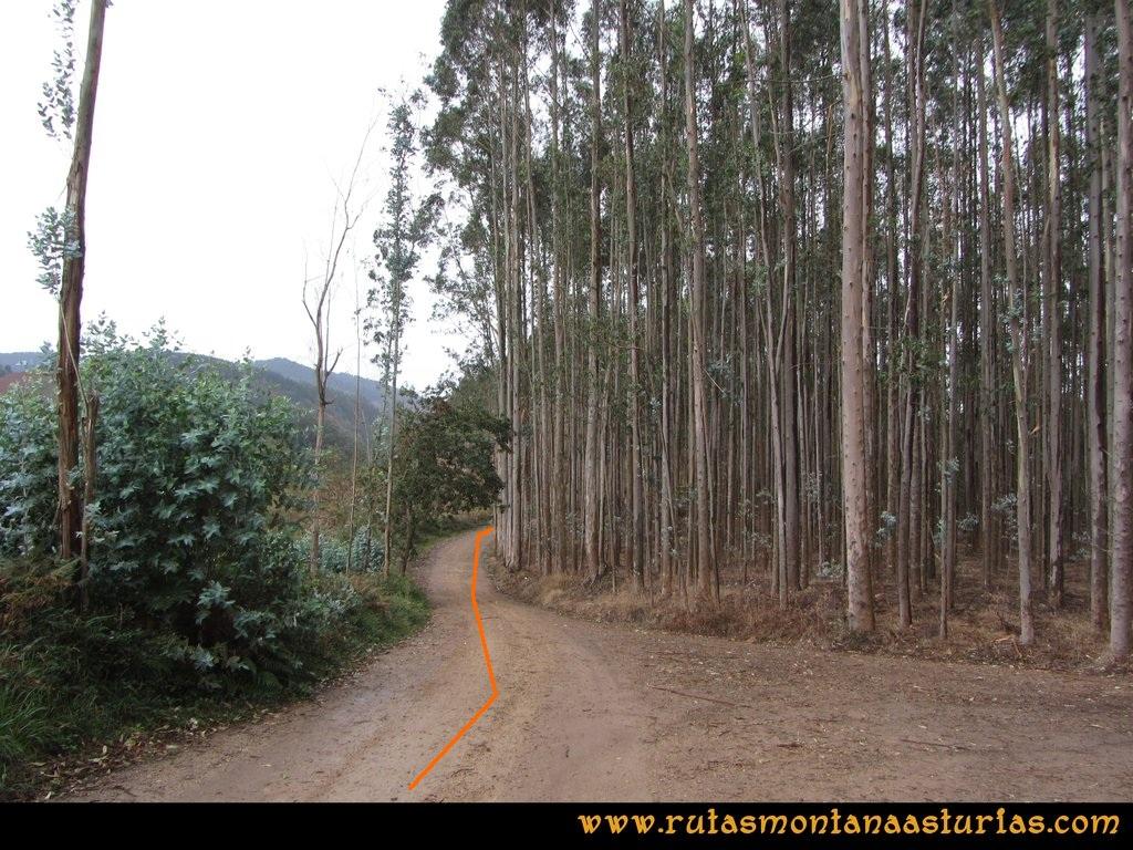 Ruta Deva, Gavio Cimero, Fario, Peña Cuatro Jueces: Eucaliptos