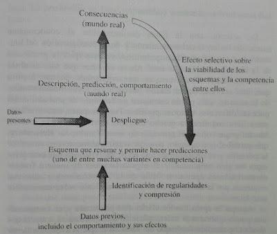 Funcionamiento de un sistema complejo adaptativo