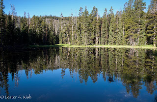 Reflections of trees on a pond surface …. Gallatin Range, Montana