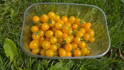 Tomate gelbe Murmel (c) by Joachim Wenk