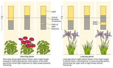 Floracion y botanica