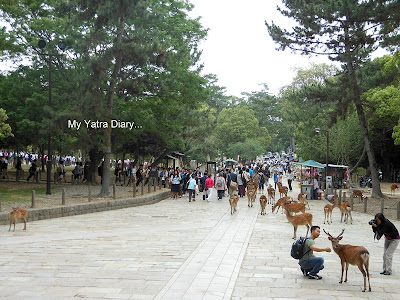 Way to the Todaiji Temple in Nara, Japan