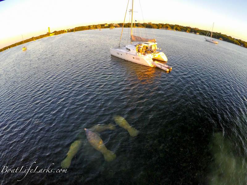 Manatees and sailing catamaran in Tarpon Basin, Key Largo